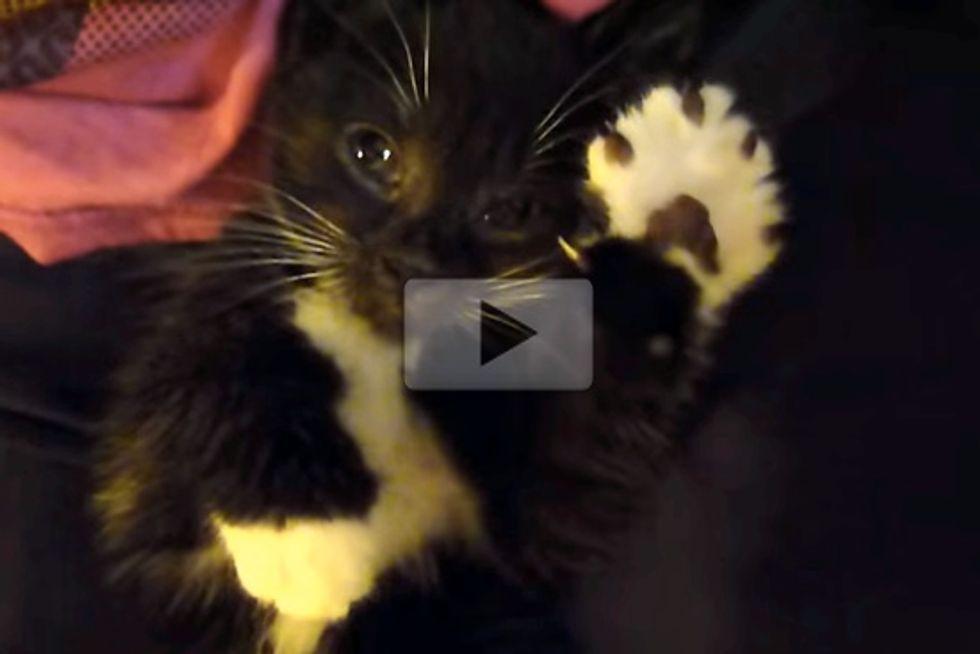 Kitten Air Massage