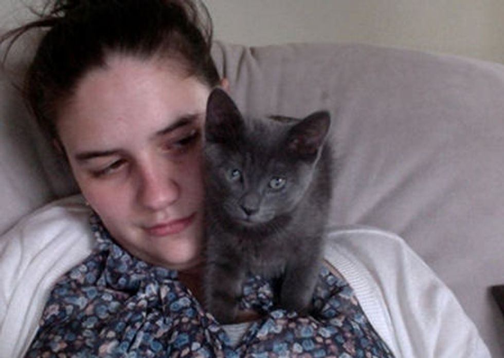 9 Stages Of Browsing The Internet With A Cat