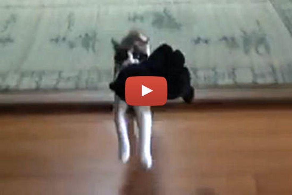 Cat Fetches Big Toy