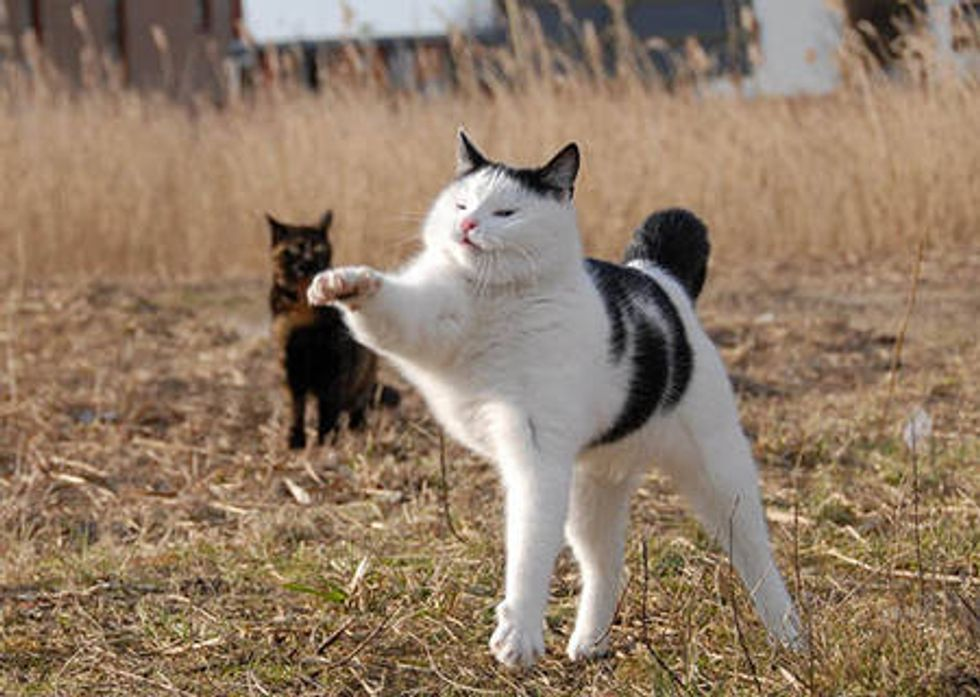 Jack The Action Cat
