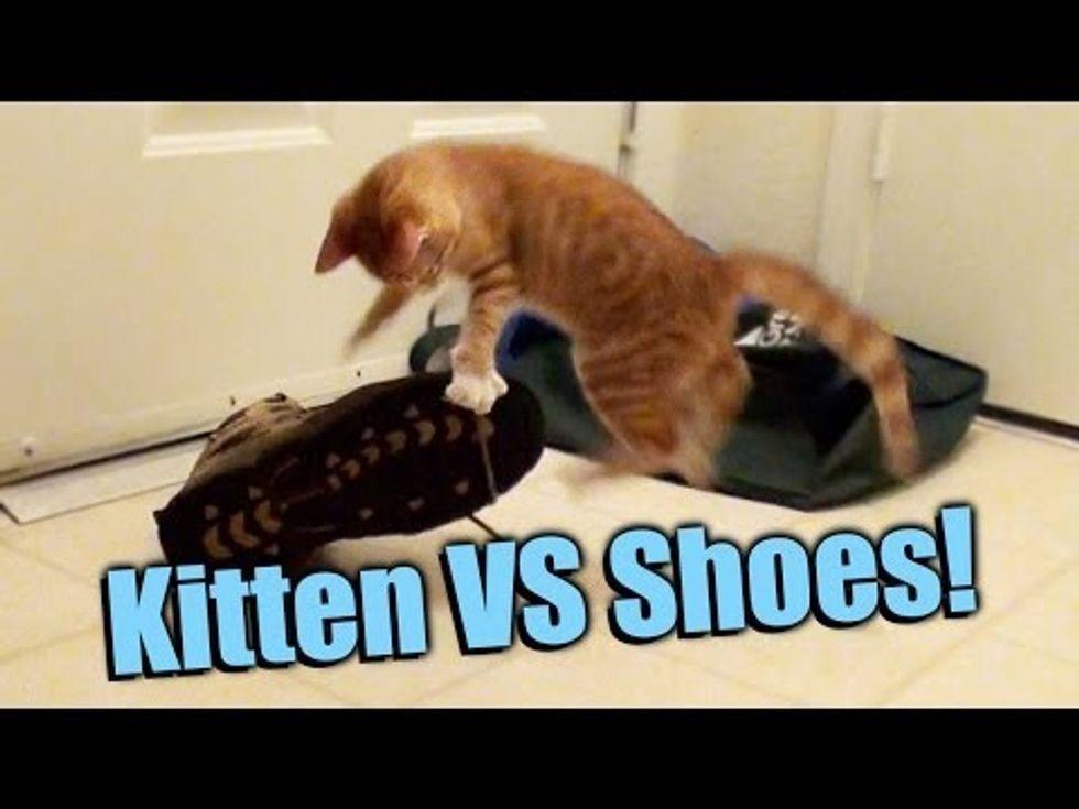 Kitten VS Shoes!