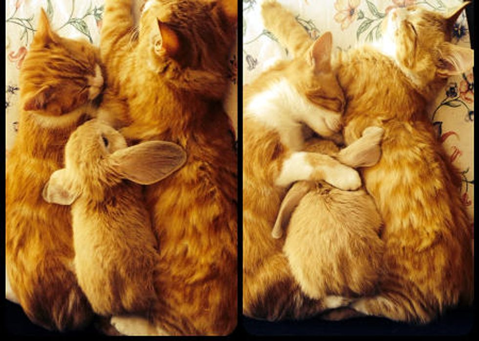 When Bunny Wants To Join A Cuddle Puddle