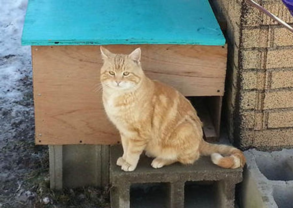 Cat Wanders In the Neighborhood Until He Finds Someone Who Saves Him