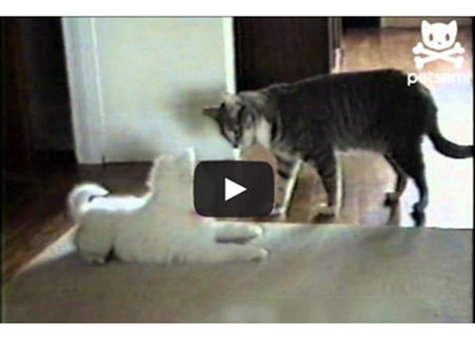 Cat Trains Dog To Roll Over
