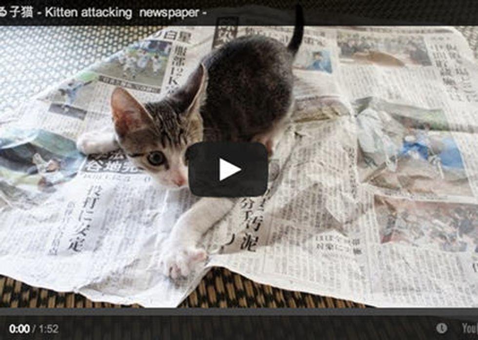 Kitten vs Newspaper