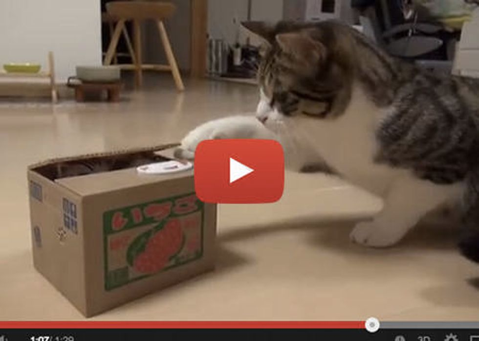 Kitty Discovers Tiny Cat In A Box