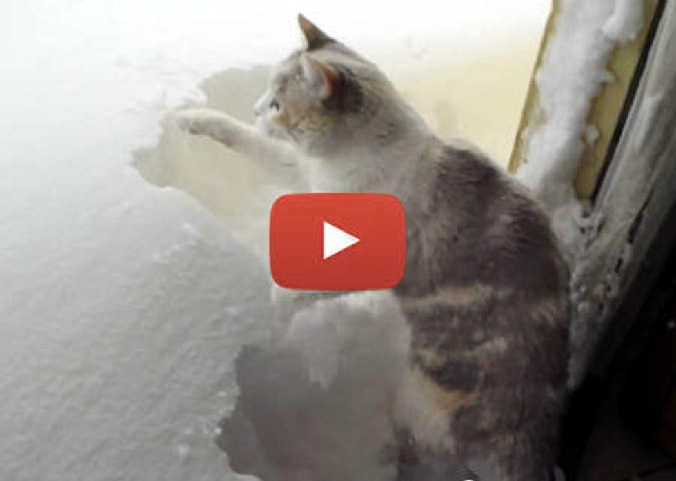 Shoveling Snow Cat