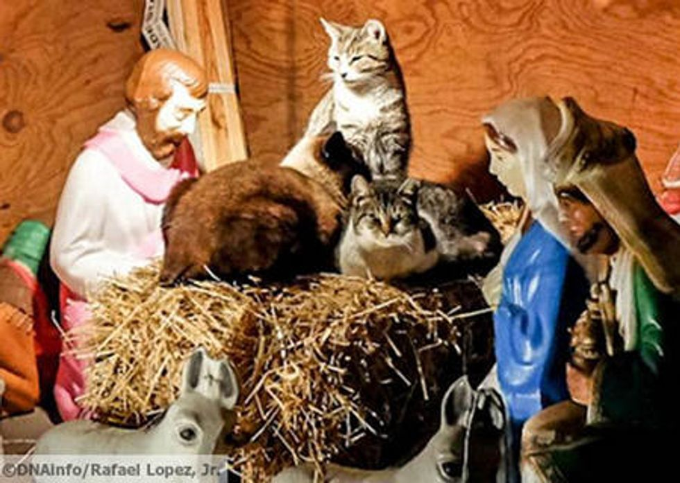 Feral Cats Find Warm Shelter in Nativity Scene