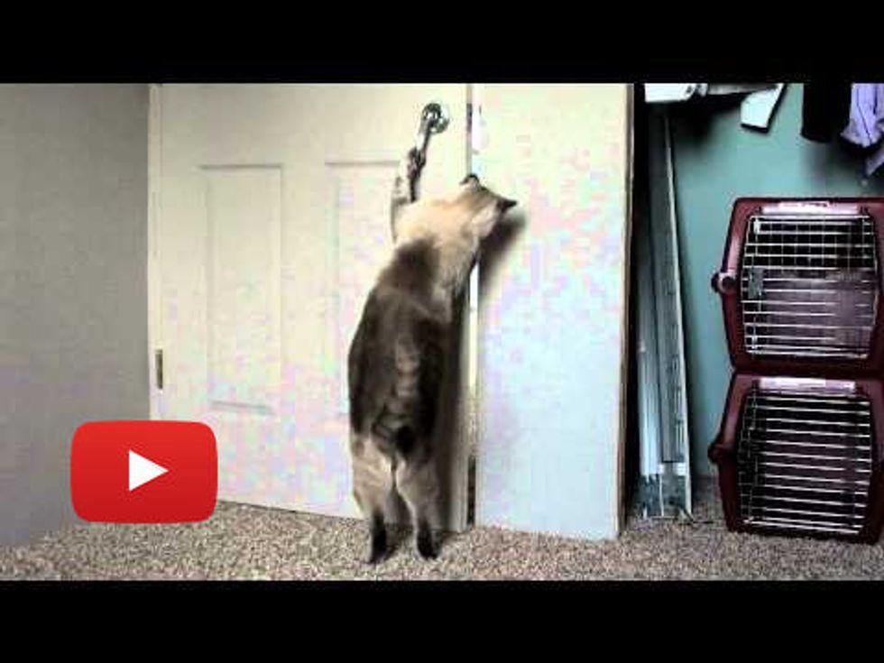 Amazing Cats Opening Doors