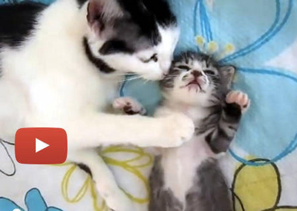 Cat Mama Comforts Sleeping Kitten