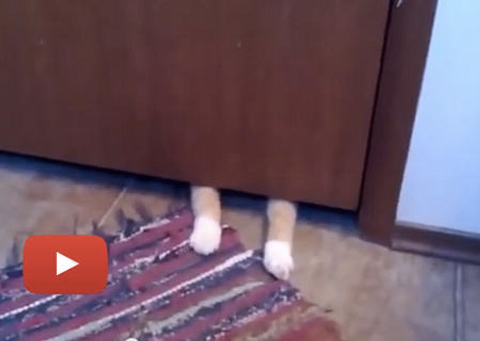 Cat Steals Bathroom Rug