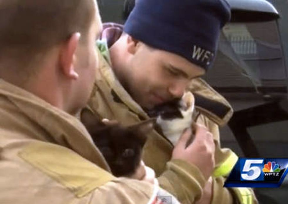 Firefighters Save Kittens From The Rubble After Fire