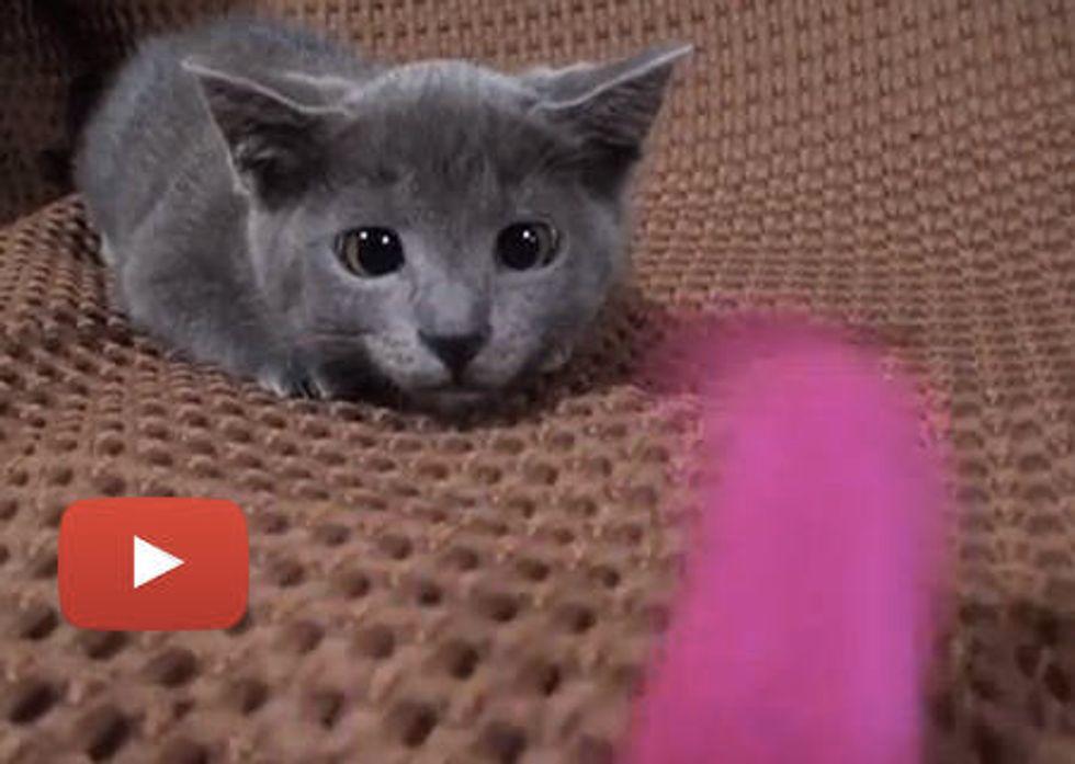 Kitty Eyes On Toy