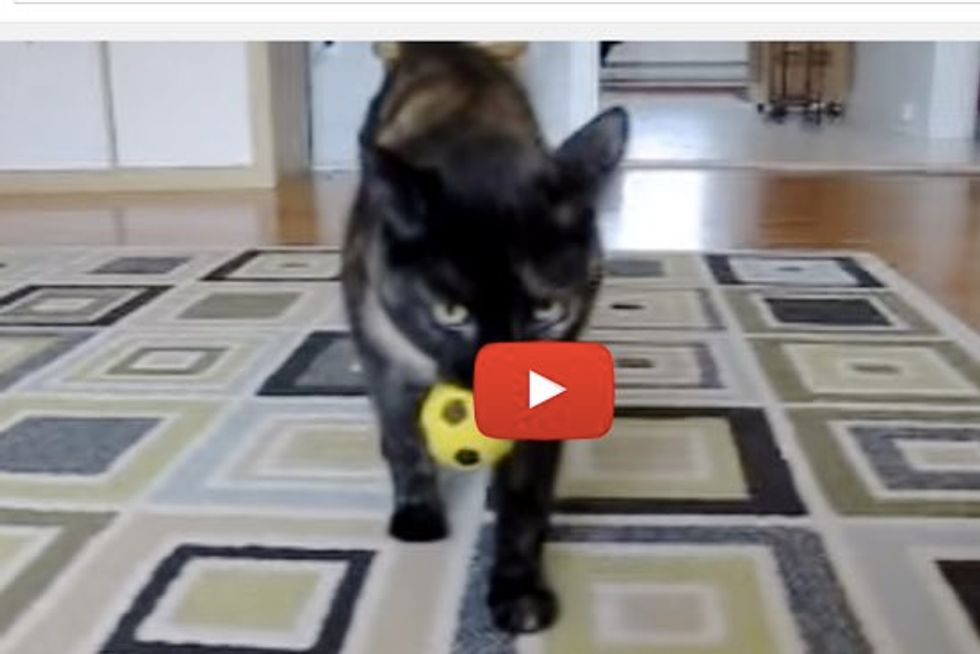 Smart Tortie Plays Fetch