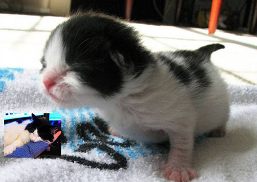 Little Cow Kitty And Her Journey