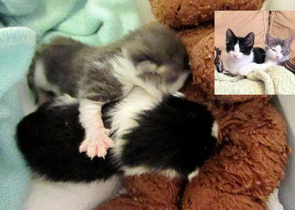 Kittens Rescued Before Storm - Journey To Forever Home