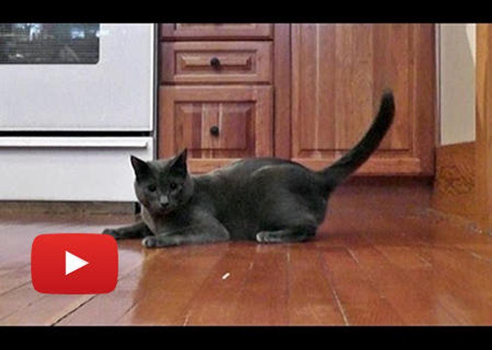 Thunder & Monkey Cat Dance The Nutcracker