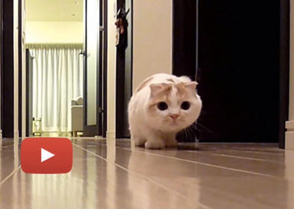 Sneaky Stalking Cat