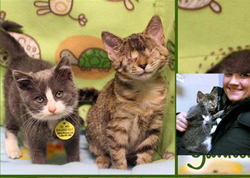 Two Brave Rescue Kittens Holiday Wish Comes True