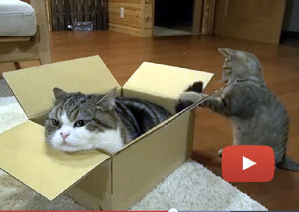 Maru And His Many Boxes