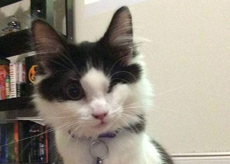 Leela The One Eyed Cat