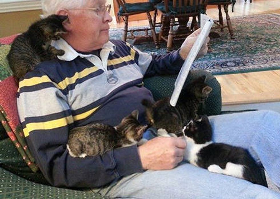 Foster Kittens Reading With Grandpa
