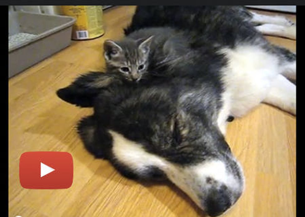 Kitties Snuggling On Big Doggie