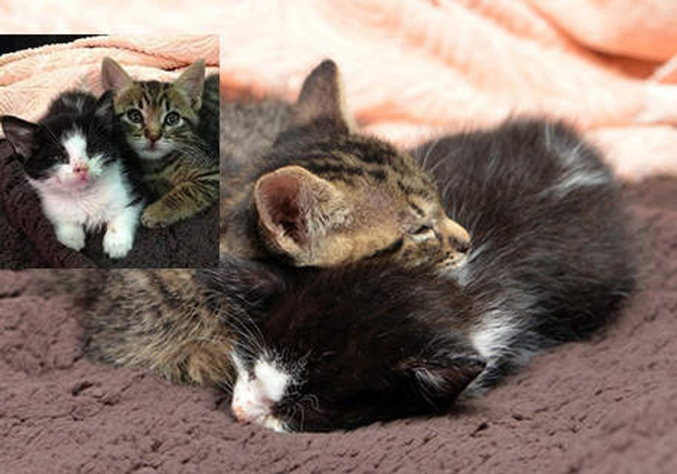 Rescue Kittens Found Each Other Became Inseparable Friends