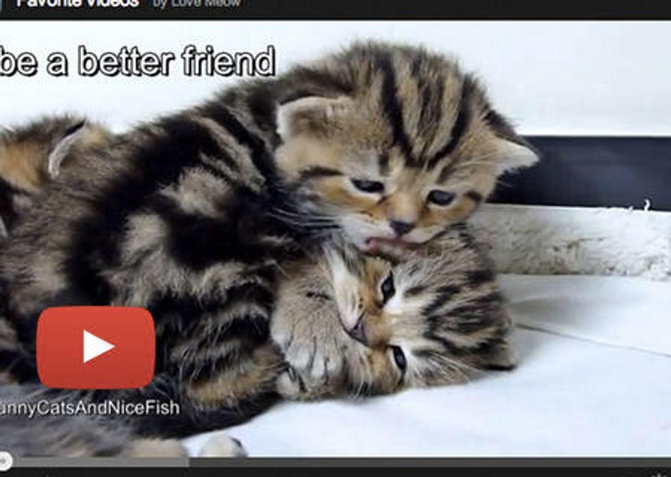 Kitties' New Year's Resolutions