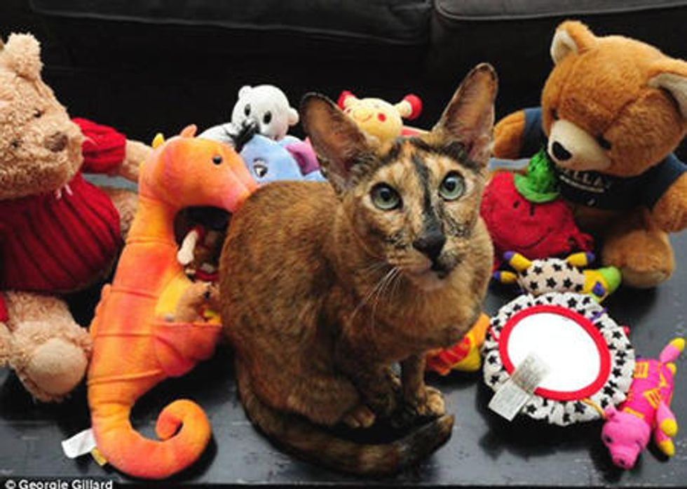 Zaza The Klepto Cat Steals 17 Toys From The Neighbors'