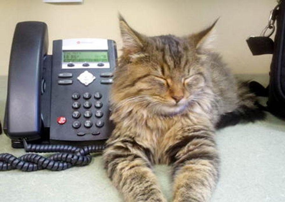 Stray Cat In Office