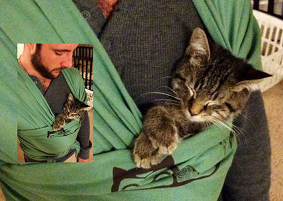 Kitten Helps Human Practice To Be A Dad