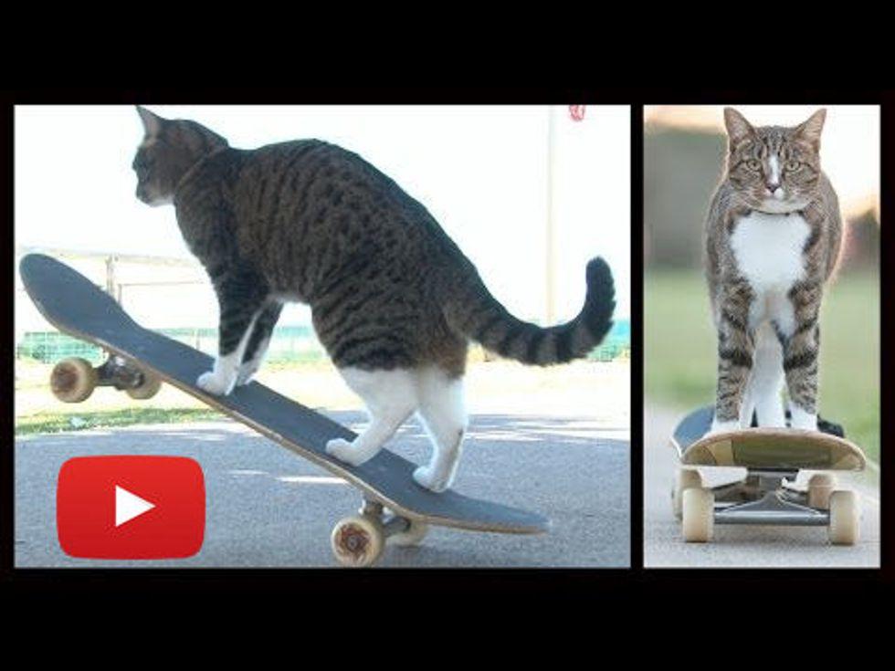 Cat On A Skateboard Ride