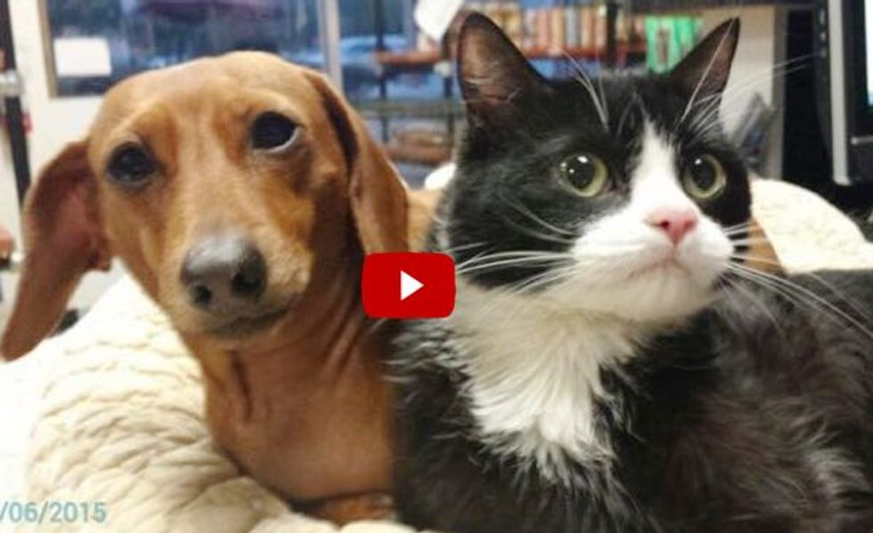 Abandoned Dog & Paralyzed Cat Found Together, Share A Special Bond
