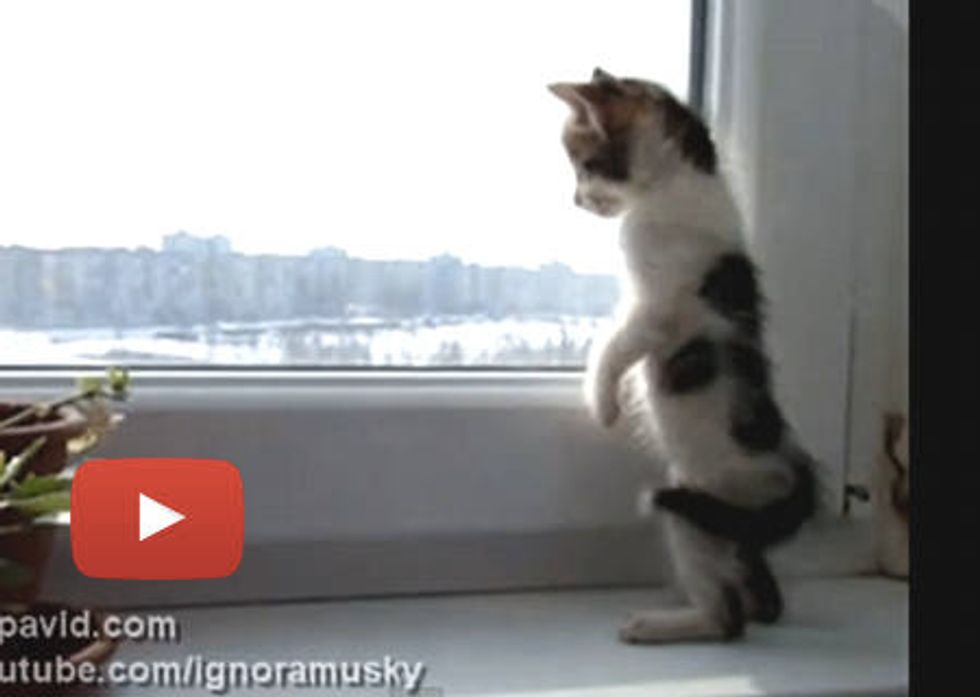 Looking Out The Window For The First Time