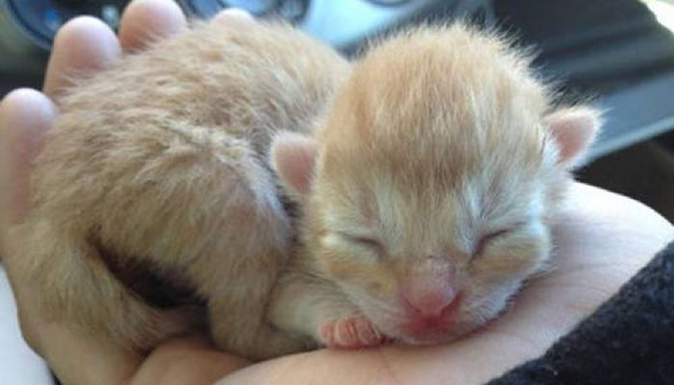 Abandoned Day Old Kitten Gets A Second Chance