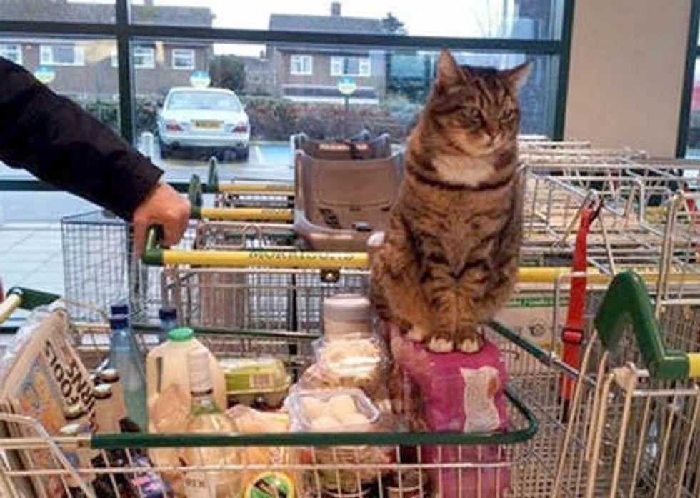 Supermarket Cat Brutus