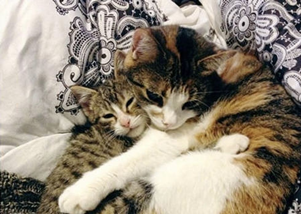 Kitten Rescued From Snow Finds Friend For Life