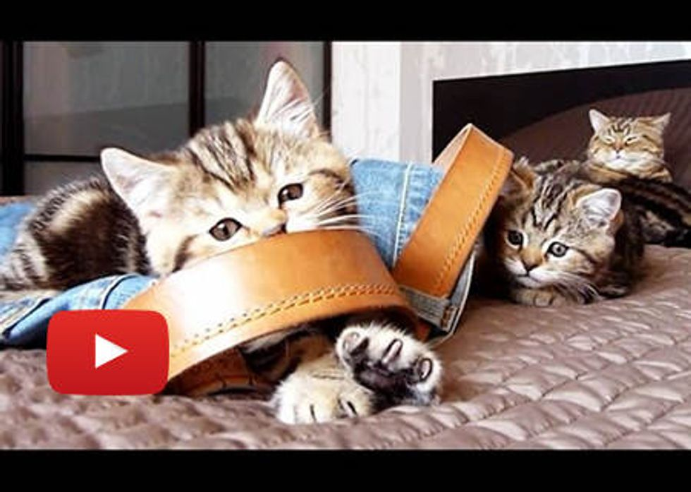 Kittens Turn Jeans Into Toys