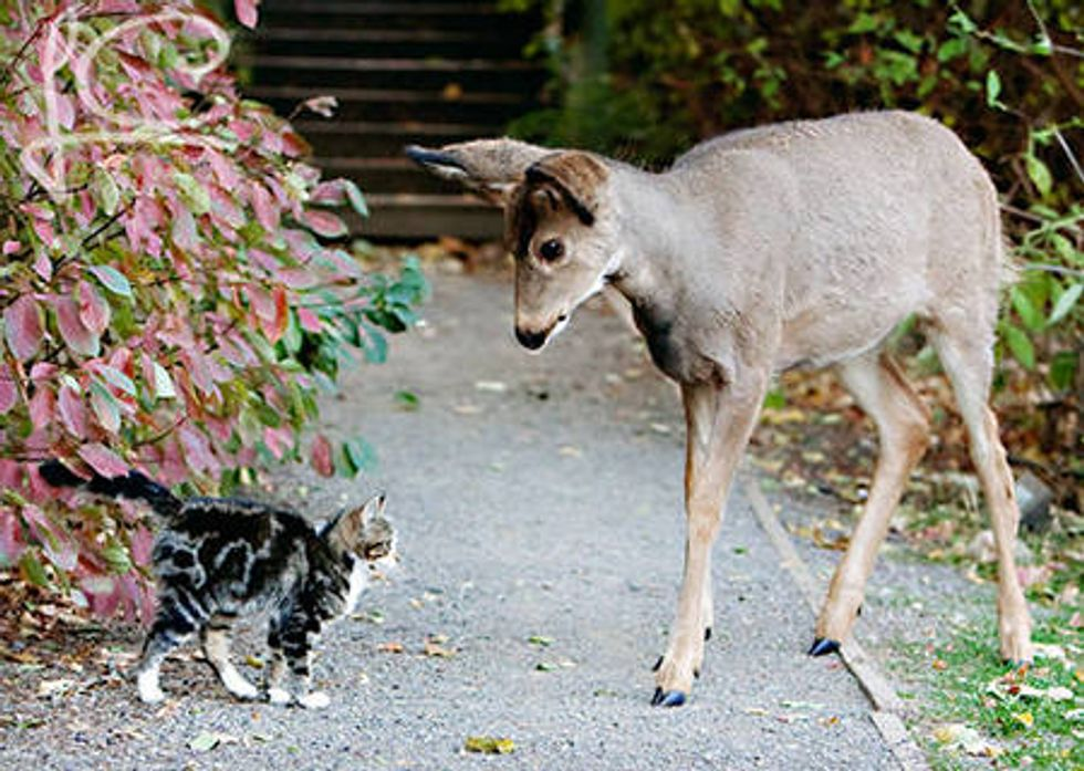 Stray Cat And His Deer Friends