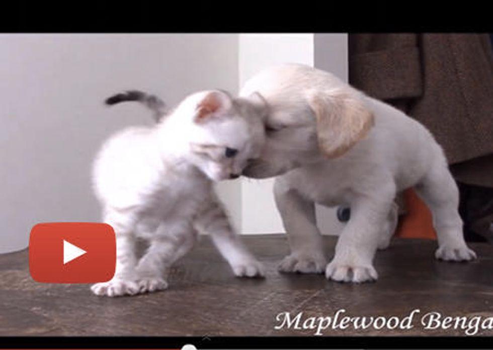 Kitten & Puppy Becoming Best Friends!
