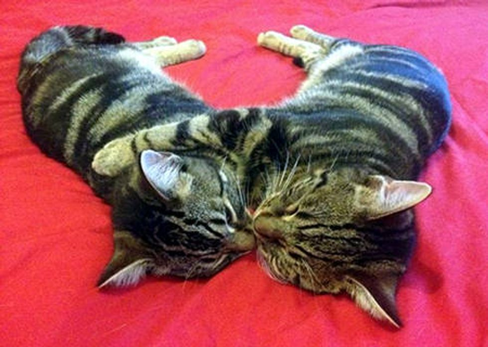 They Find Love At Forever Home