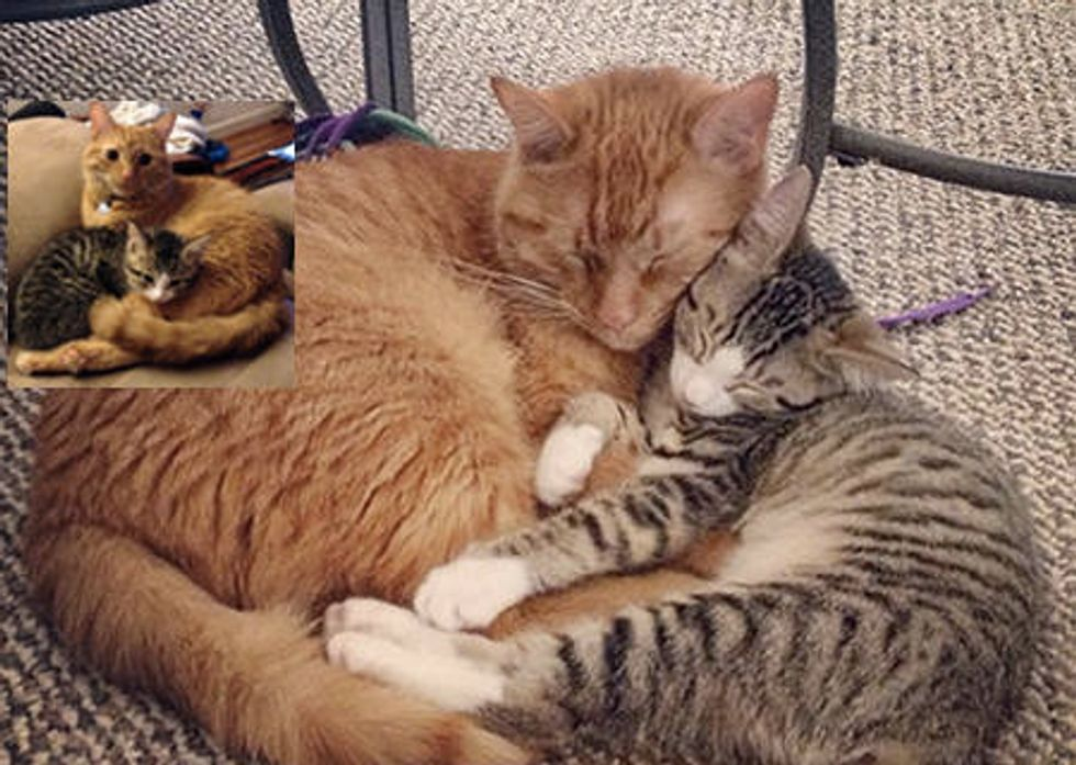 Little Rescue Kitten And Her New Protective Brother