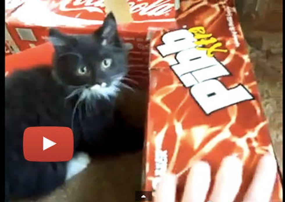 Kitten's Soda Box Fort