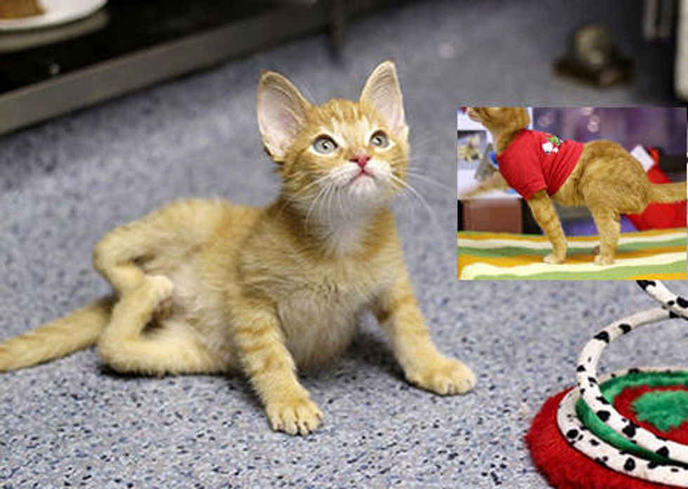 Cat Born With Backwards Legs Can Now Walk & Run