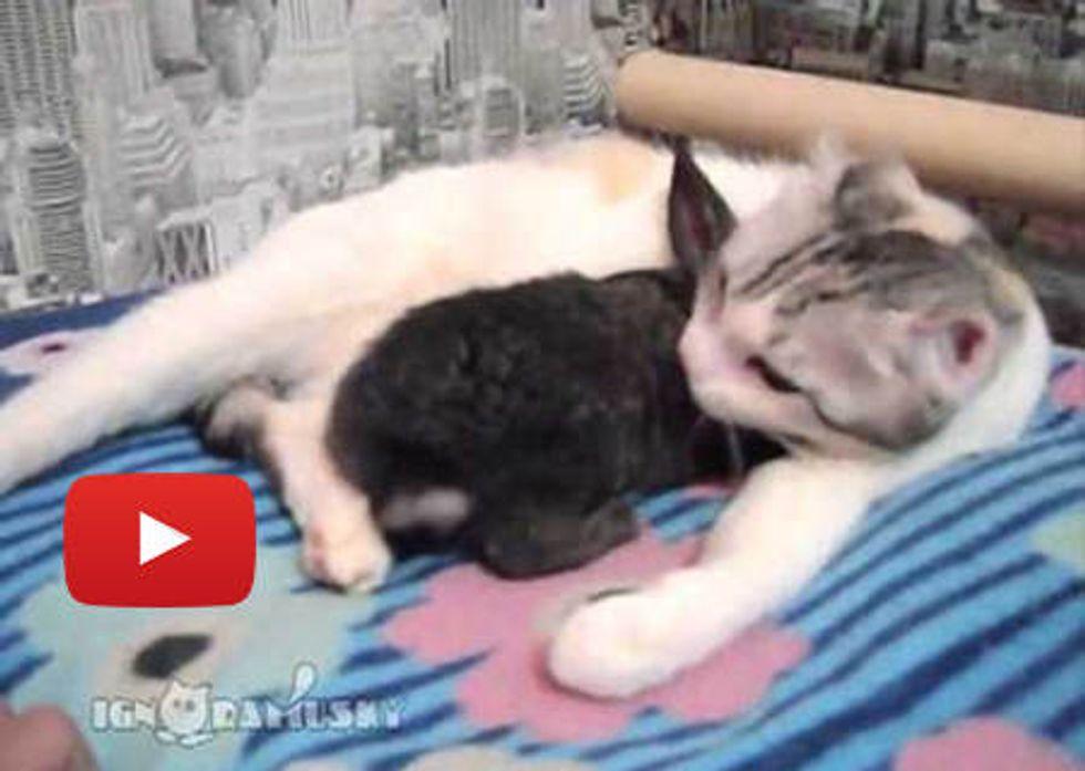 Cat Gives Bunny A Bath