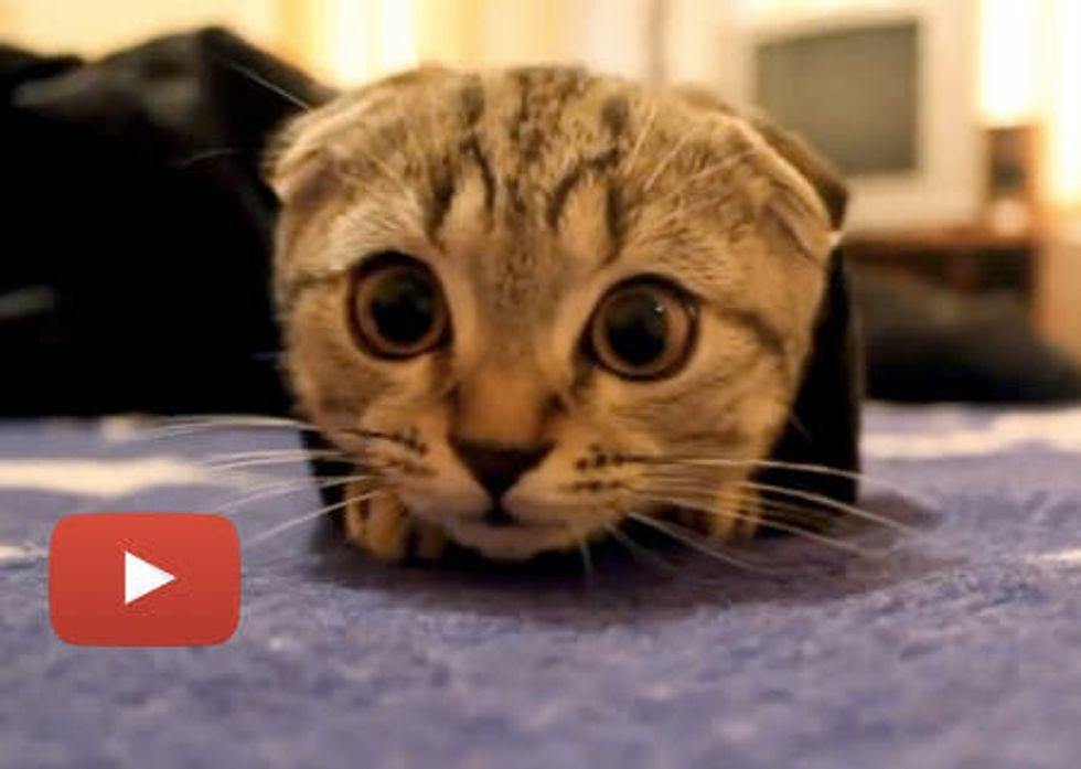 Kitten Plays Peekaboo In Jacket Sleeve