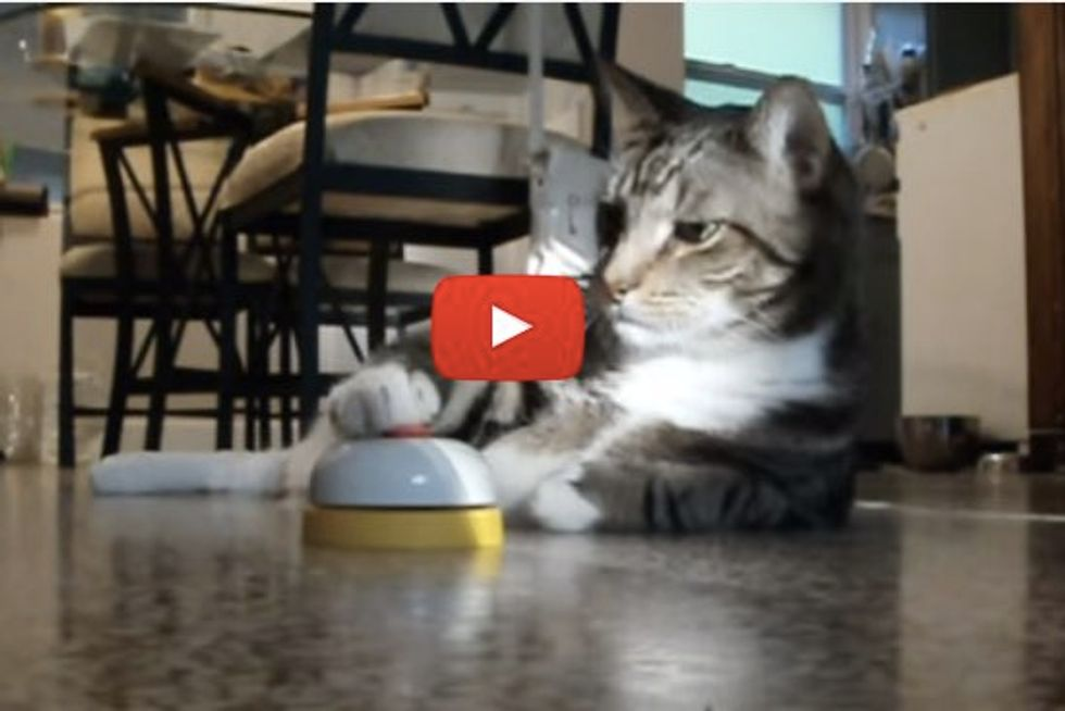 Cat Rings Bell For Service And Treat...