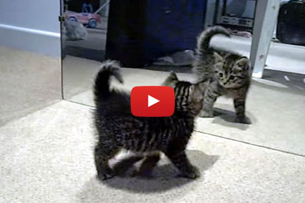 Cute Kitten Discovers His Reflection