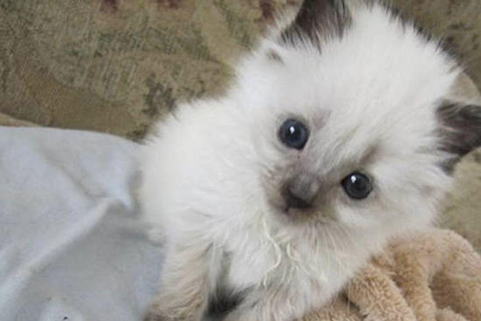 Sophie The Rescue Kitten & Her Journey